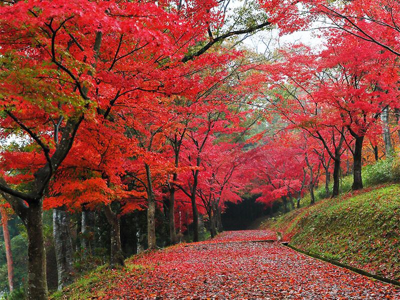 Kyoto Tamba Park