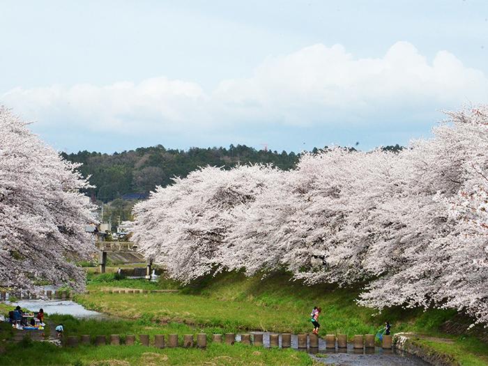 寧靜之道茶之京都