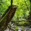 숲의 교토'의 숲