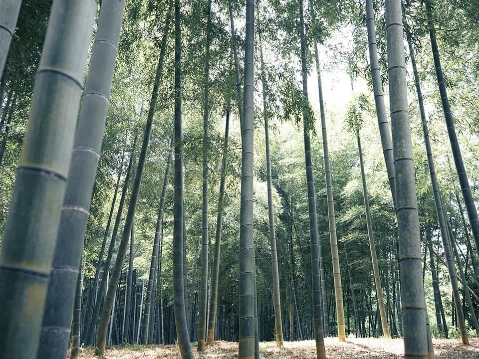 다케노미치(대나무길)