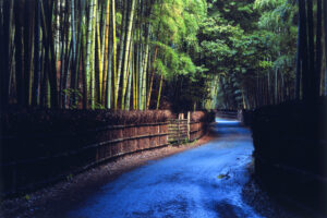 Take-no-Michi (The Bamboo Path)