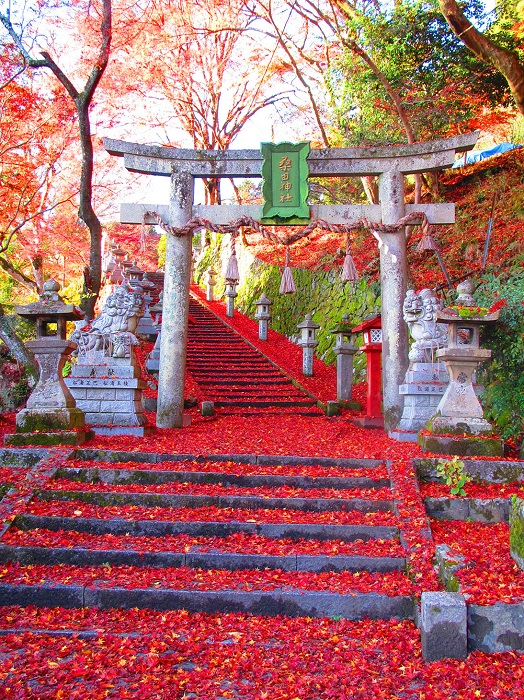 Seek out some of the best autumn foliage in the temples of Kyoto Prefecture