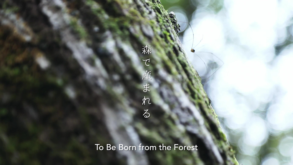 To Be Born from the Forest